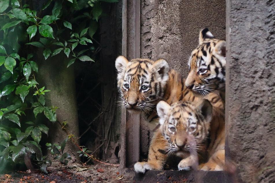 Hagenbecks Tierpark: Diese Tiere können weiterhin nicht bestaunt werden