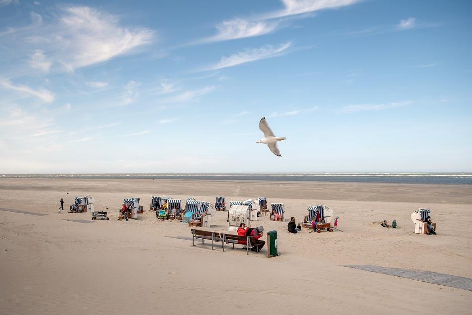 Eine Möwe fliegt über die von Urlaubern genutzten Strandkörbe am Strand von Spiekeroog.