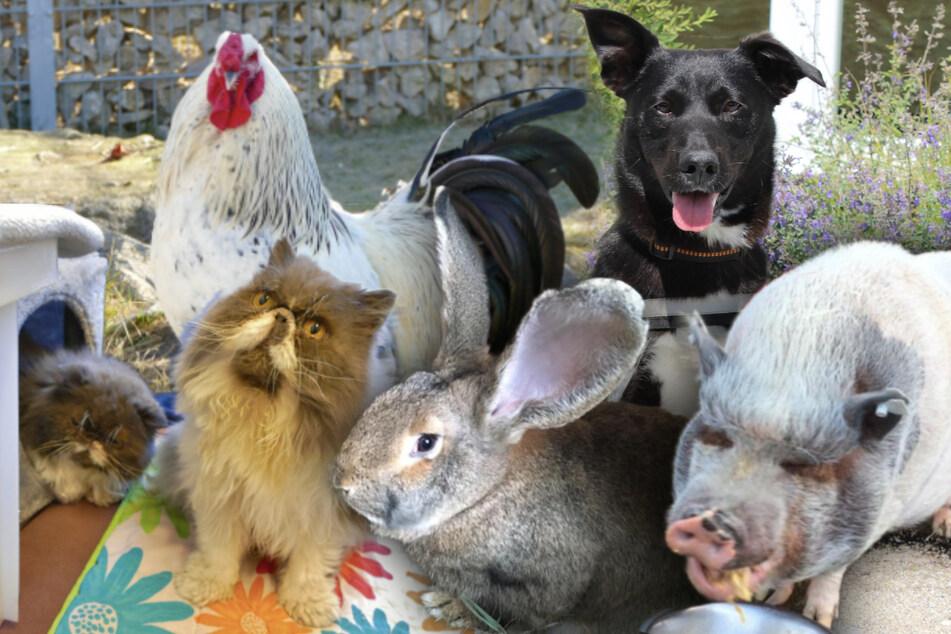 Diese Tiere suchen ein neues Zuhause.
