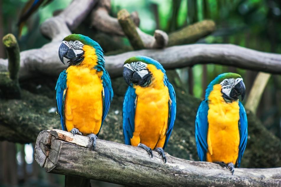 Spannende Rekorde und Tierfakten warten in der Kategorie Wissenswertes rund um Tiere auf Euch.