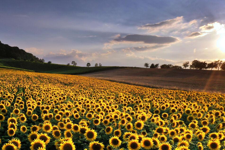 Im Freistaat dürfen sich die Bürger auf jede Menge Sonnenstrahlen freuen. (Archiv)