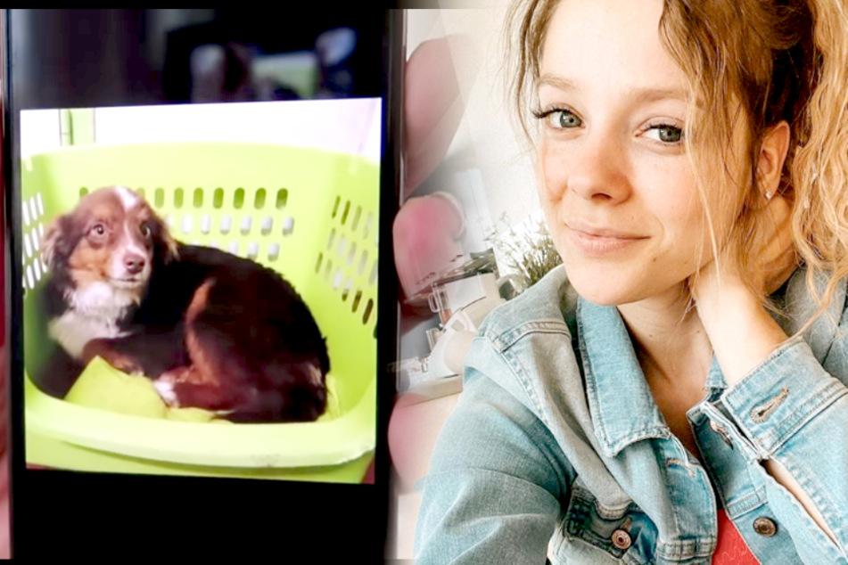 Anne Wünsches (28) Freund Karim hat sich einen Hund gekauft.
