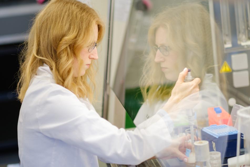 Braunschweig: Die Wissenschaftlerin Katharina Kleilein untersucht an der Sterilbank im Labor des Life-Science-Unternehmens Yumab die optische Dichte einer Bakterienkultur. Das Startup-Unternehmen forscht zur Entwicklung menschlicher Antikörper und versucht so Medikamente gegen Covid-19 zu entwickeln.