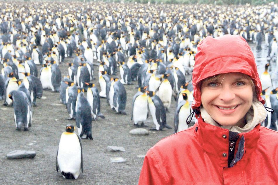 Einmaliges Erlebnis: An die vielen Pinguine in der Antarktis erinnert sich die Moderatorin heute noch gern zurück, ebenso an die knuffigen Robben.