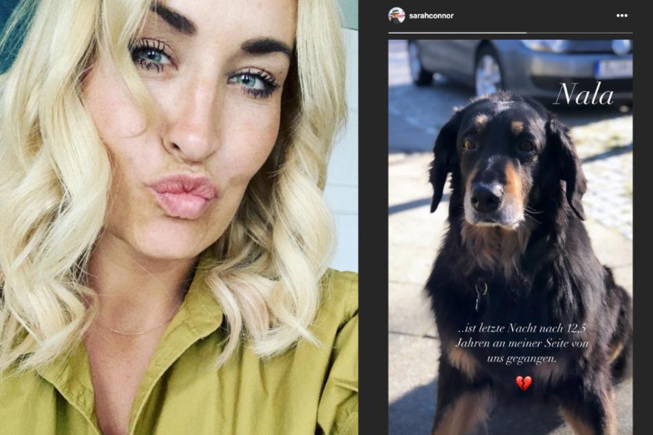 Die Sängerin vermisst ihren Hund Nala.