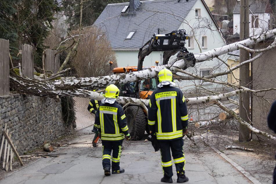 Rumms, da lag ein Baum auf der Annenstraße in Annaberg-Buchholz! Die Feuerwehr beseitigte die Birke.