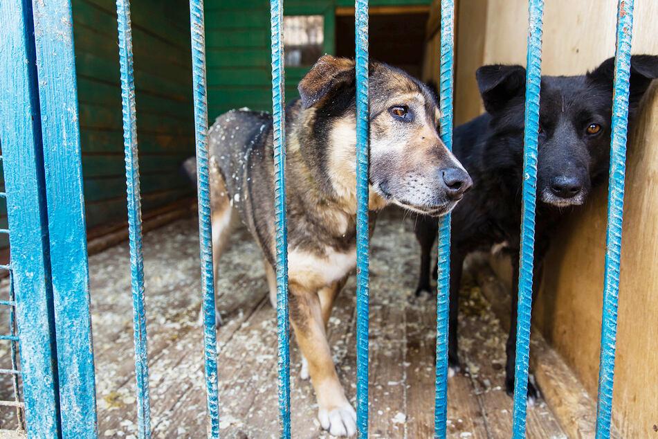 Zwischen Müll und toten Tieren: Mann hält 25 Hunde und Katzen in dunklem Container