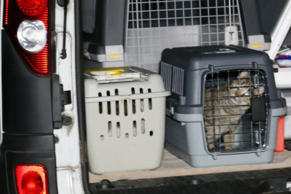 Horror-Haus von Katzenfängerin: Tier aus Fenster geworfen, Retter geschockt von Lage im Inneren