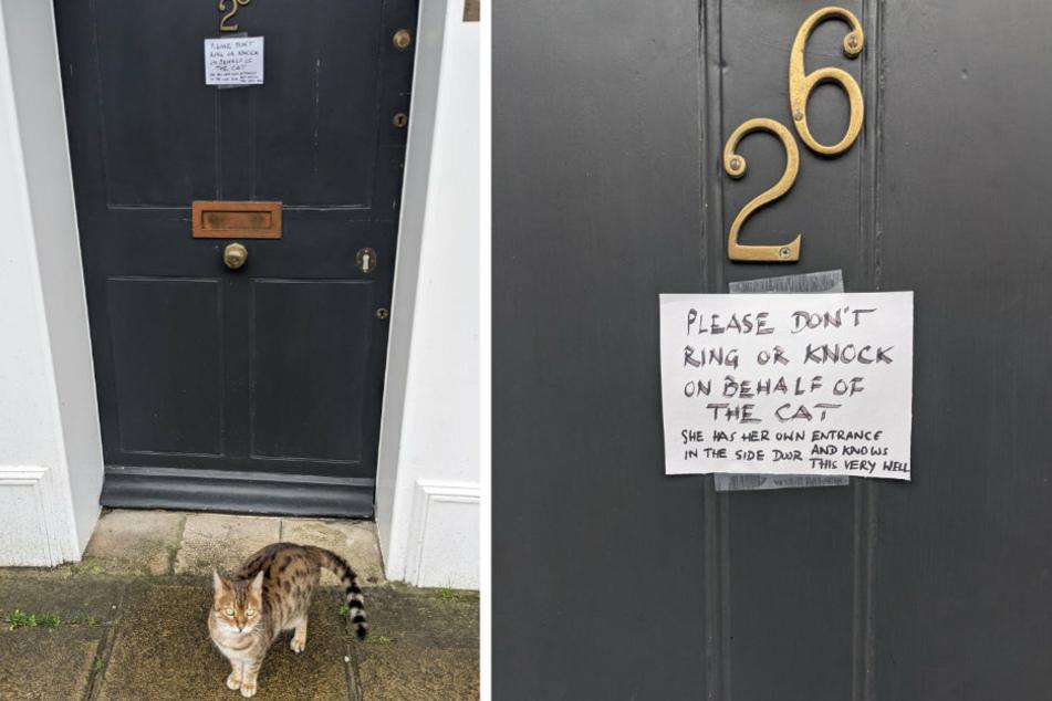 Nur eine Katze vor einer Tür, die reinmöchte? Falsch gedacht! Wie der Engländer auf Twitter zeigt, bitten die Besitzer mit einem Zettel, nicht zu klopfen oder zu klingeln. Die Katze wisse ganz genau, welchen Eingang sie nehmen muss.