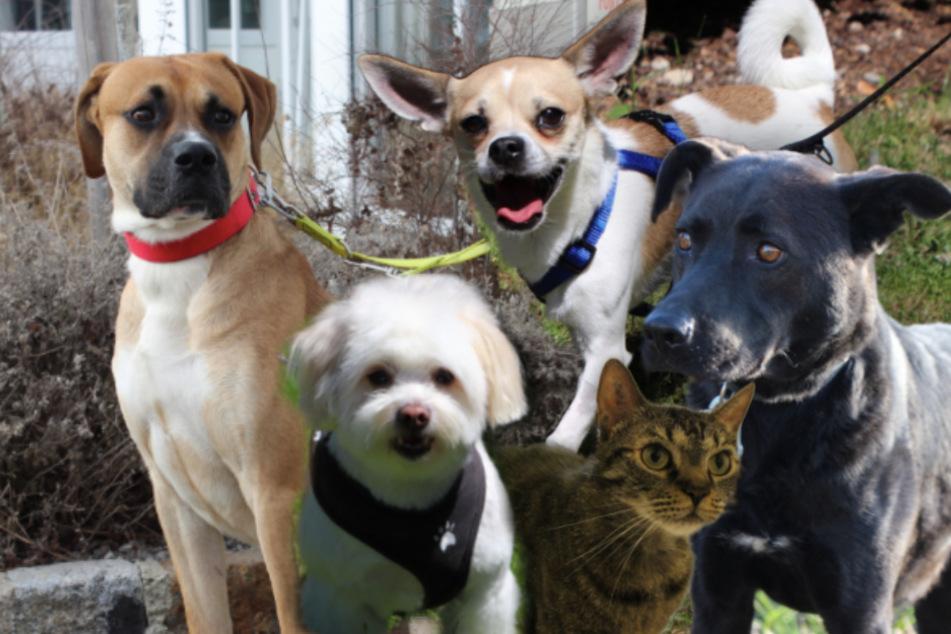 5 besondere Tiere: Diese Hunde und Katzen suchen endlich ein Zuhause