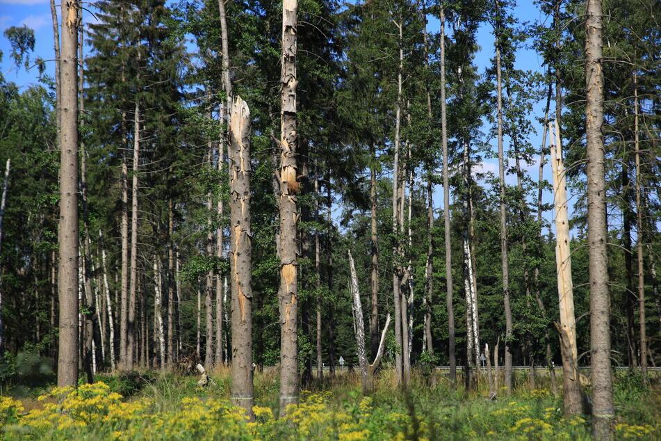 Kaum Niederschlag und viel Sonne haben den Waldboden im Harz austrocknen lassen.