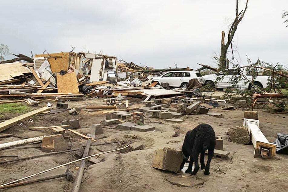 Ein Hund läuft zwischen den Trümmern eines Hauses und Geschäfts.