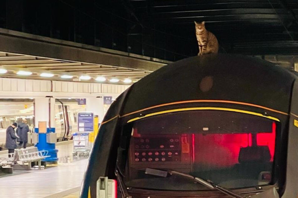 A whisker away from cat-astrophe: high speed train with feline hitchhiker stopped just in time