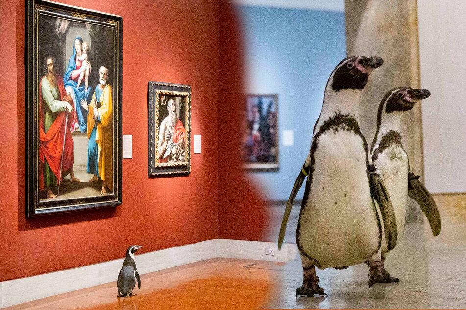 Pinguine laufen durchs Museum und können ihre Augen nicht von den Gemälden abwenden