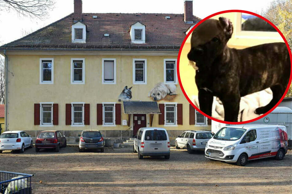 """""""Biggi"""" aus Tierheim geklaut: Zeugen entdecken Hündin in Dresdner Wohnung eines 31-Jährigen!"""