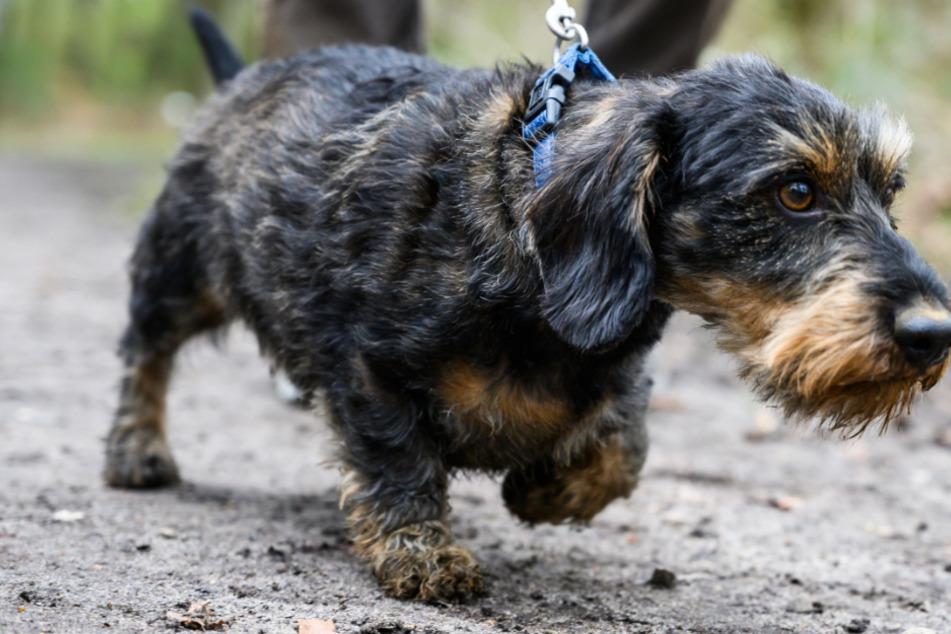 Rattengift: Hier müssen Hundebesitzer jetzt aufpassen!