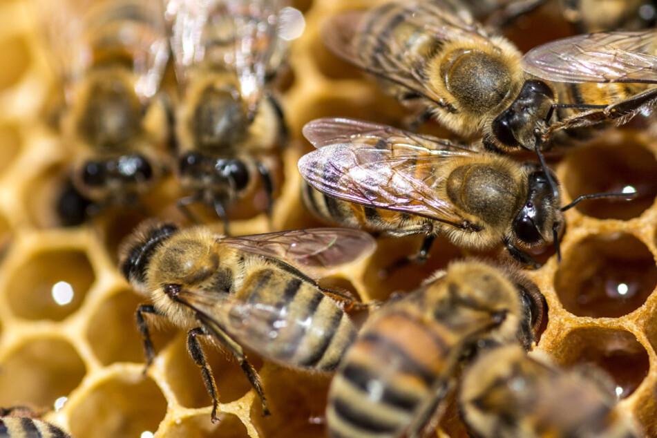 Bienenvolk belagert Straße in der Innenstadt: Polizei sucht Besitzer