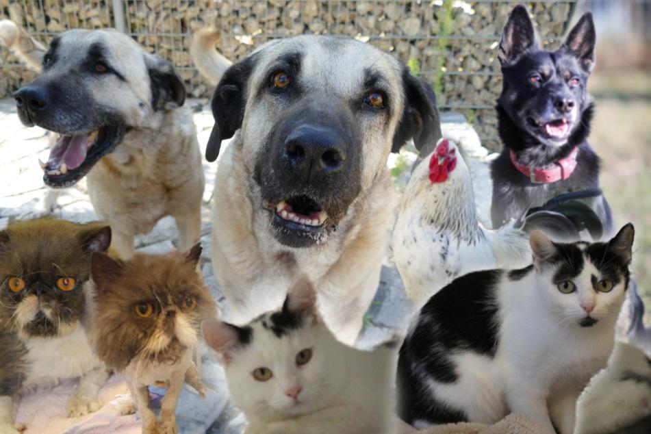 8 besondere Tiere: Hunde, Katzen und ein Hahn suchen endlich ein Zuhause