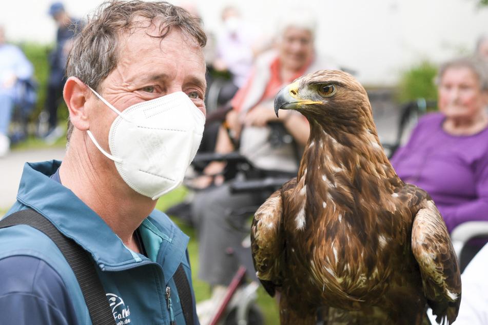 Der Falkner Paul Klima und sein Steinadler Bruno, aufgenommen bei einer Greifvogel-Vorführung in einem Seniorenheim.