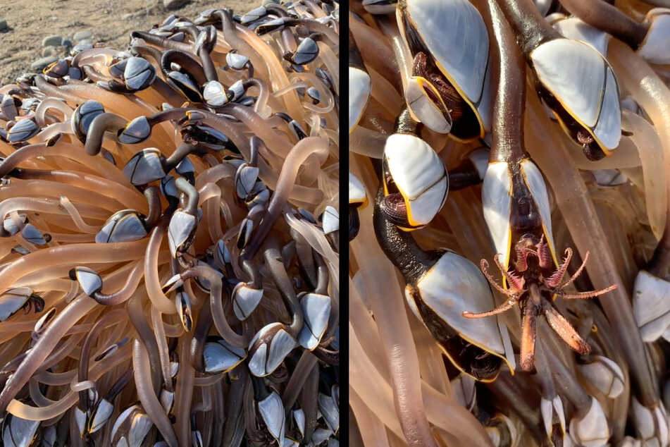 Vacationer discovers strange alien-like creatures on beach