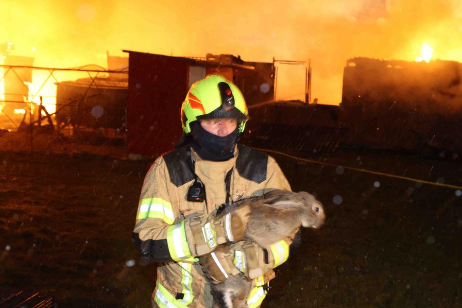 Baracke brennt lichterloh: Feuerwehr befreit Hasen aus Flammeninferno