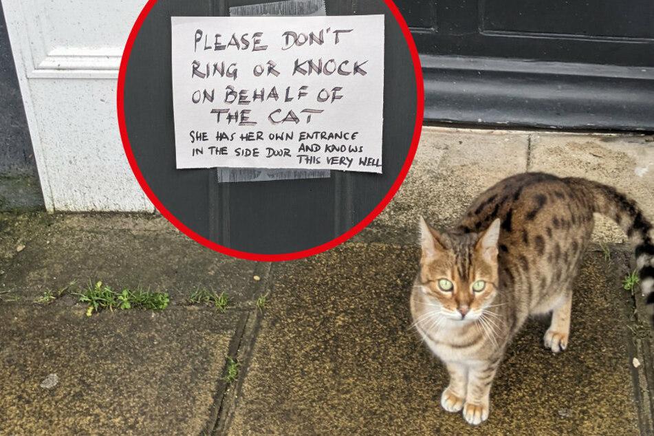Mann geht spazieren und entdeckt Katze vor einem Haus: Der Zettel an der Tür bringt ihn zum Lachen