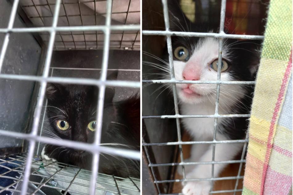 Die Kätzchen gucken neugierig durch die Gitterstäbe ihrer Transportboxen. (Fotomontage)