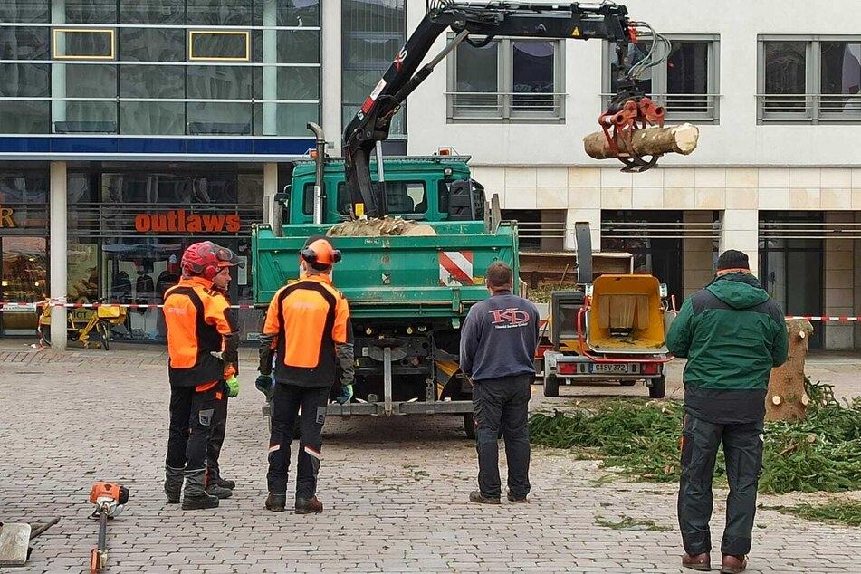 Der Baum wurde stückweise abgetragen und wegtransportiert.