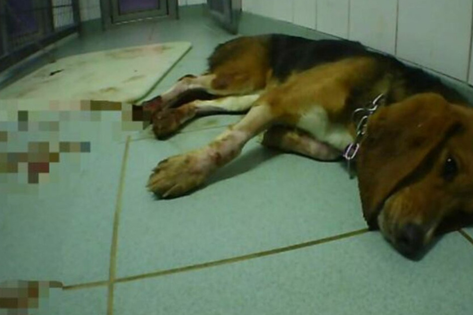 Ermittlungen wegen Tierquälerei in Versuchslabor dauern an