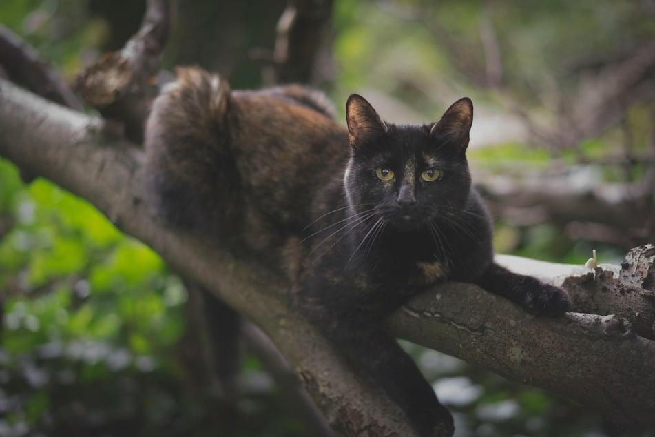 Auch im hohen Alter gibt es für Katzen im Garten noch viel zu entdecken.