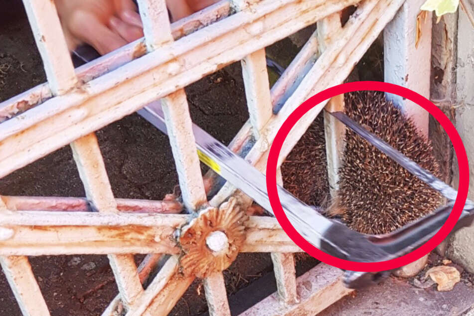 Das Bild zeigt, wie der Igel aus dem Gartentor heraus gesägt wurde.