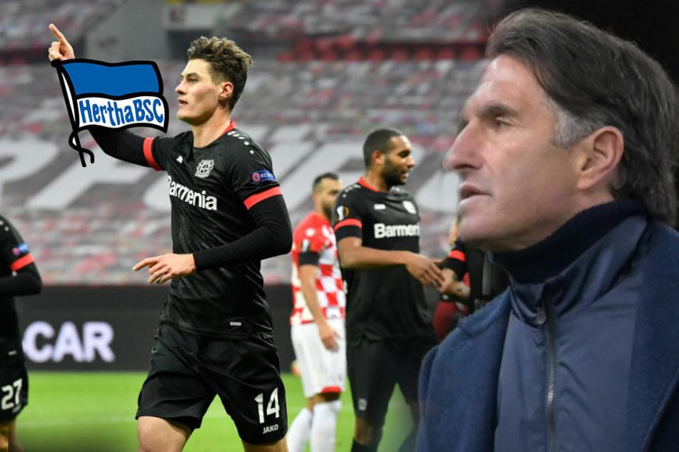 """Hertha BSC vor schwerer Aufgabe: """"Bayer auf einer Stufe wie Dortmund"""""""