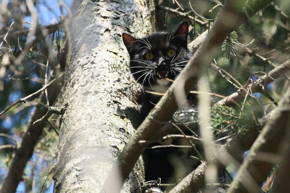 Die Katze saß auf einem Baum in etwa zehn Metern Höhe fest.