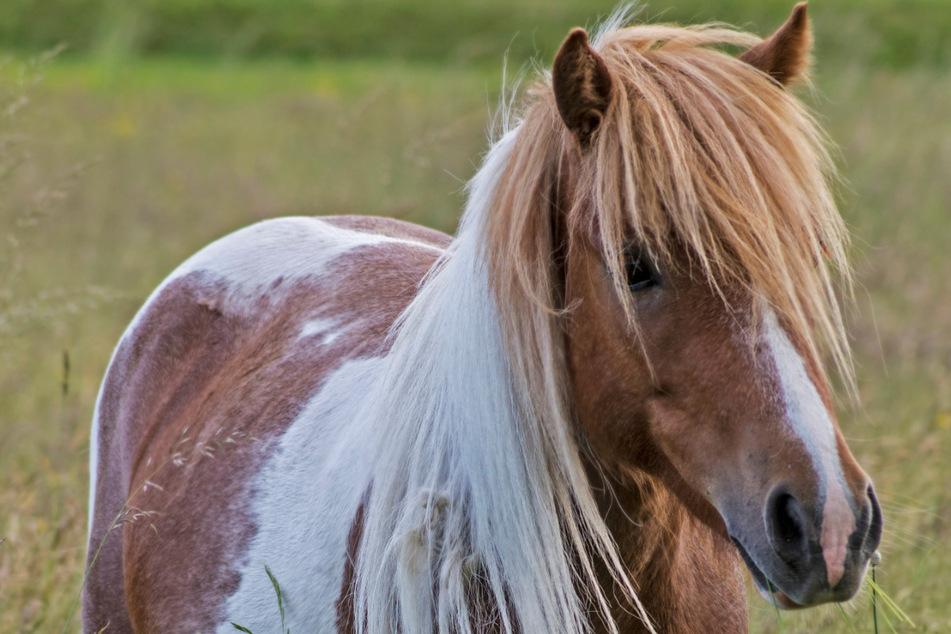 Hunde reißen sich los und stürmen Pferdekoppel: Flucht endet für Pony tödlich