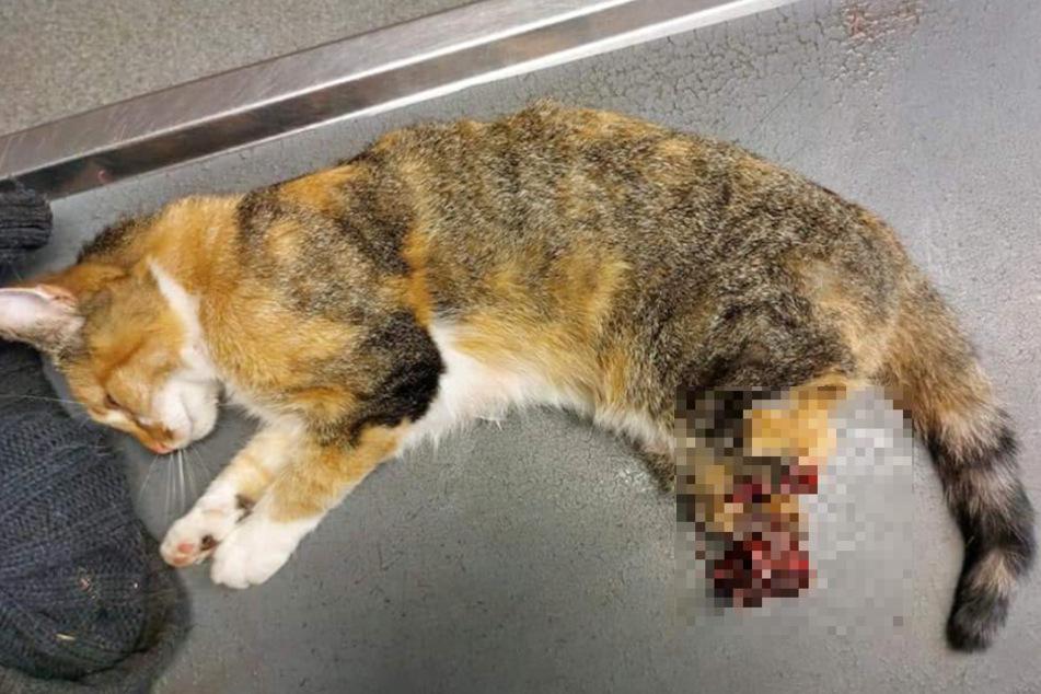 Die Katze wurde an ihren Hinterbeinen stark verletzt.