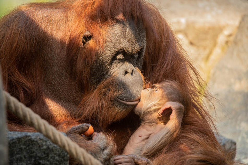 Das Baby knabbert an den Lippen seiner Mutter.