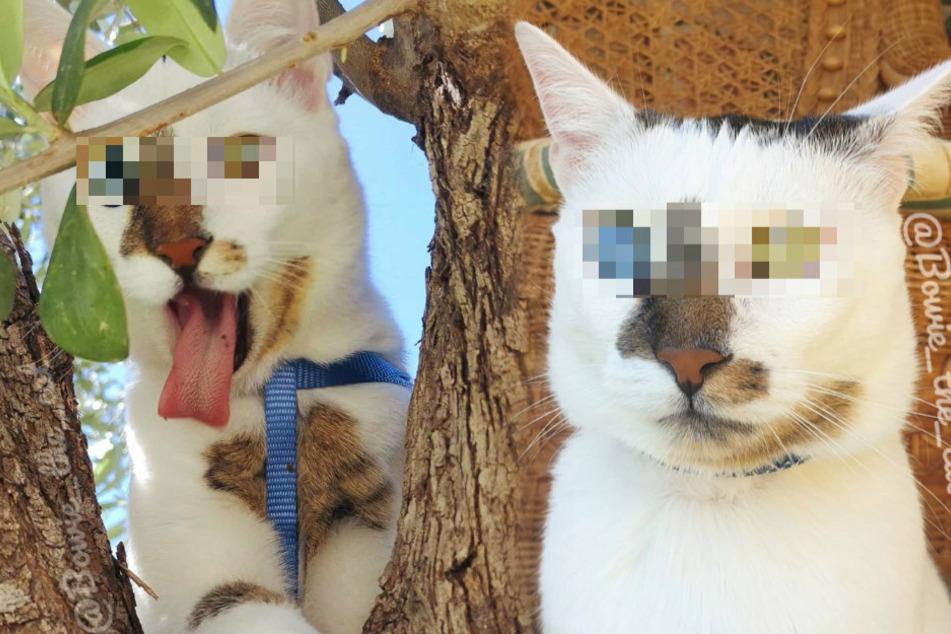 Wahnsinn! Die Augen dieser Katze begeistern zahlreiche Menschen