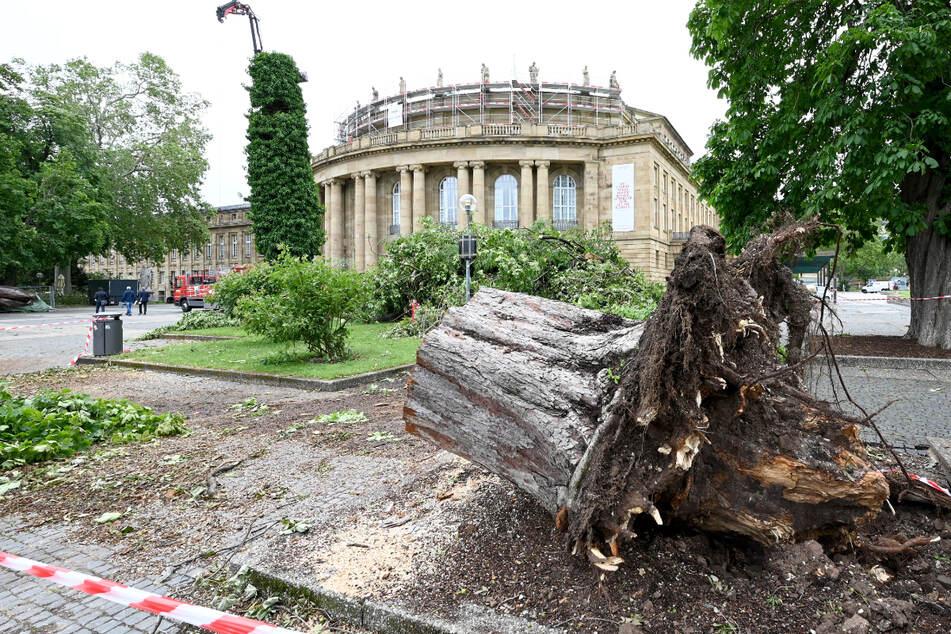 Die Wurzel eines bei einem Unwetter umgestürzten Baumes liegen vor dem Stuttgarter Opernhaus. Bei einem Unwetter wurden Teile des Daches zerstört, Wasser drang ein, eine Premiere musste abgesagt werden.