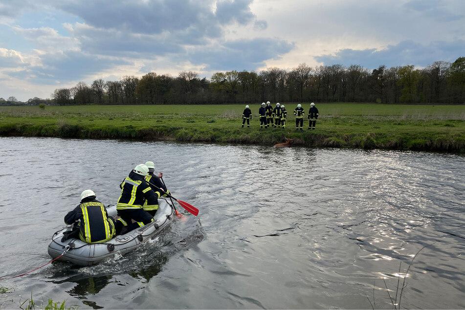 Mit einem Schlauchboot eilten die Feuerwehrmänner dem Rind zu Hilfe.