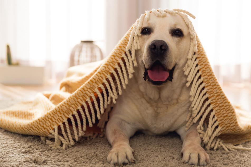 Spiel und Spaß mit dem Hund zu Hause: So wird Eurem Vierbeiner nicht langweilig