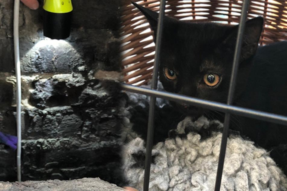 Dramatische Rettungsaktion! Katze fällt in 10 Meter tiefen Kaminschacht