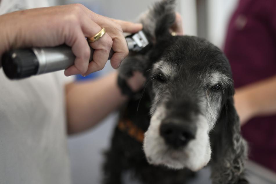 Hunde und Katzen: Nützliche Tipps für den Besuch beim Tierarzt