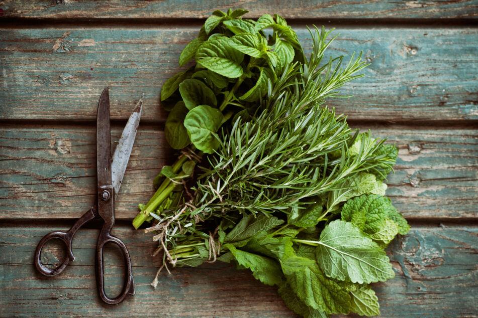 Ihr werdet staunen, welche Pflanzen essbar sind - und schmecken!