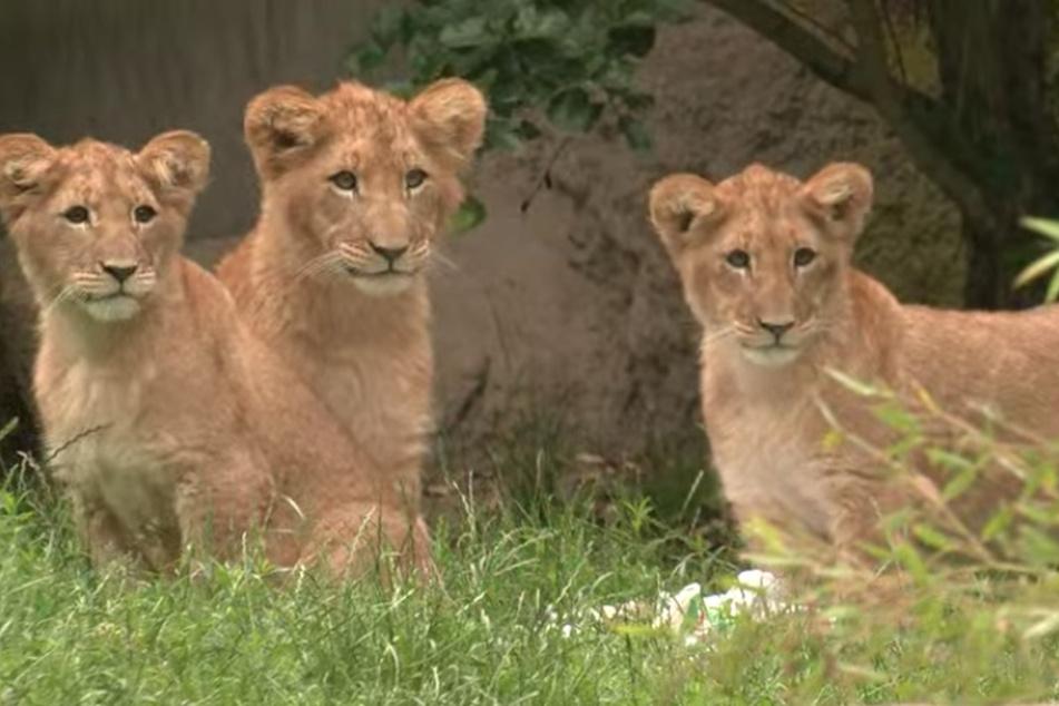Hanna, Elsa und Mateo sitzen direkt nach der Taufe gemeinsam im Gras.