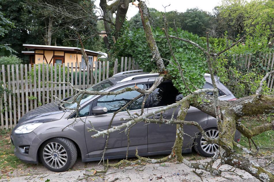 Mit über 100 km/h: Sturm Kirsten zieht über Sachsen hinweg und richtet Schäden an
