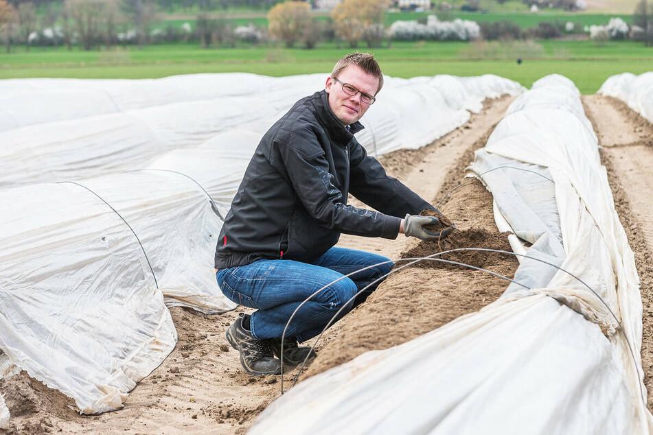 René Heidig bewirtschaftet zehn Hektar Spargelfelder. Er macht sich Sorgen um den Absatz.