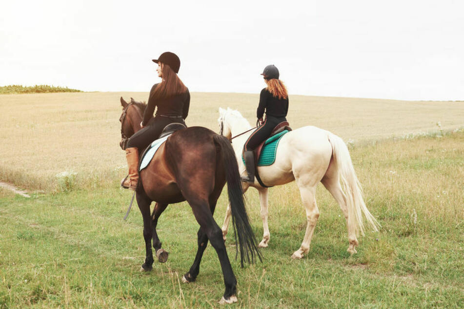 20 Kinder bei Unfall mit Pferden auf Ferienfreizeit verletzt