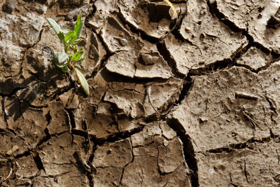 Das Foto aus dem Jahr 2011 zeigt einen ausgetrockneten Ackerboden.