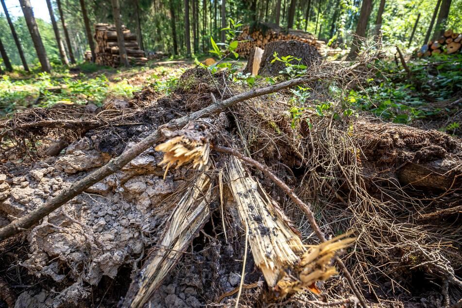 Chemnitz: Spender gesucht! Hier könnt Ihr helfen den Wald aufzuforsten