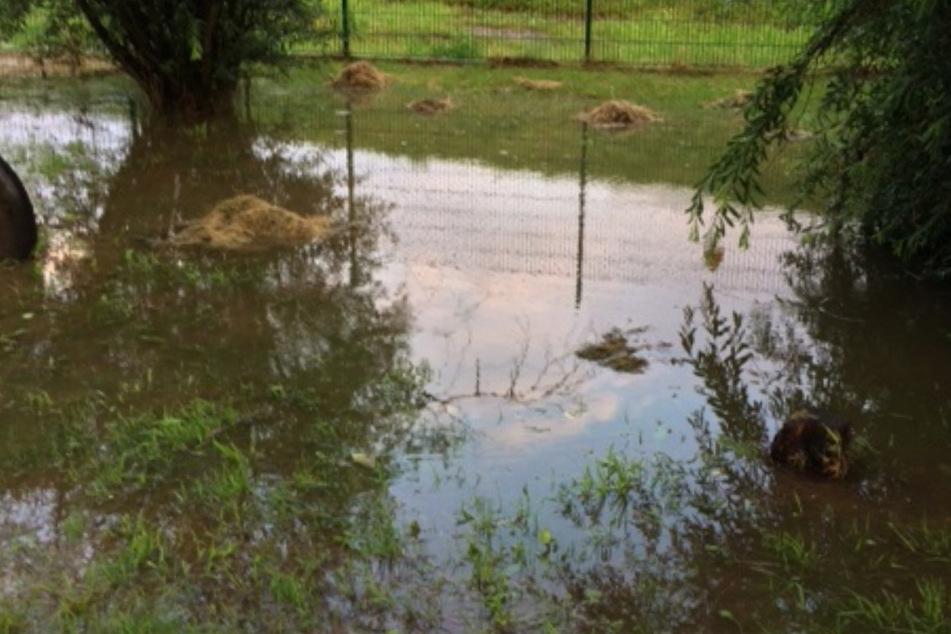 Im Tierheim Röhrsdorf wurden Teile des Freigeländes überflutet.